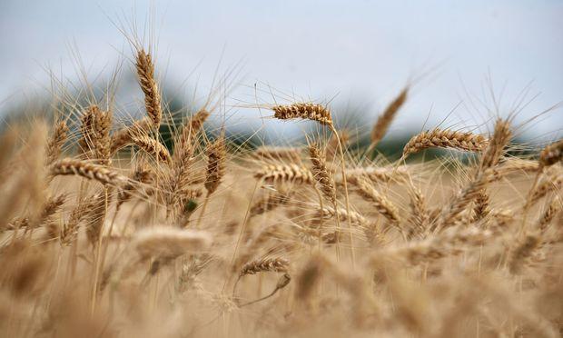 Der Bauernbund fordert eine europaweit verpflichtende Herkunftskennzeichnung für verarbeitete Lebensmittel.