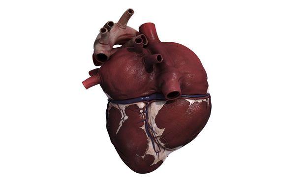 Die durchschnittliche Zahl von Herzinfarkten pro Tag ist bei kalten Temperaturen deutlich höher als bei warmen.