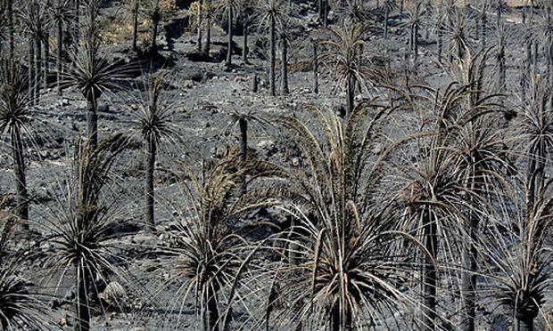Gomera Feuer Brandstiftern gelegt