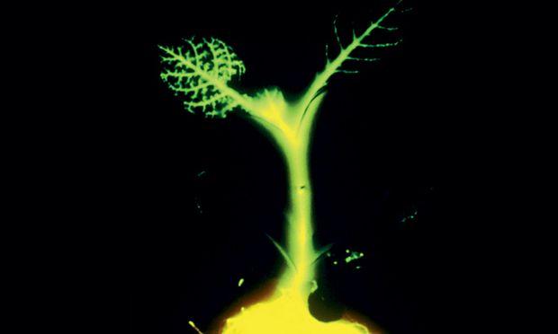 Pflanzen illuminieren