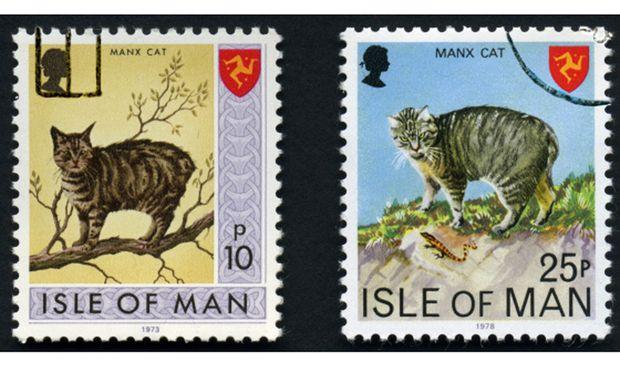 Das kommt vom Trödeln: die Manx-Katze, ein Stolz der Insel.
