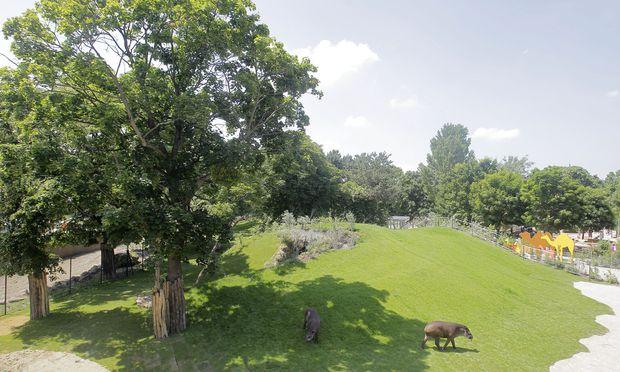 Im Südamerika-Park im Zoo Schönbrunn leben Ameisenbären, im Botanischen Garten soll Platz für Vögel geschaffen werden.