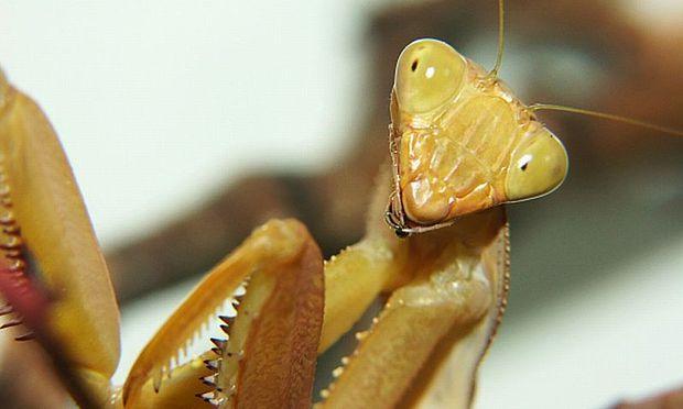 Insekten sind nicht die einzigen Tiere mit Häutungsmolekülen.