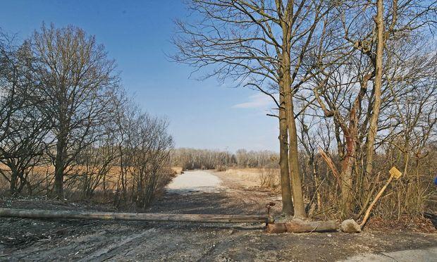 Autobahnbau? Nationalpark! Donauau bei Mühlleiten.