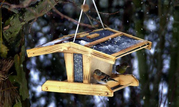 Vögel suchen im Vogelhaus nach Nahrung.