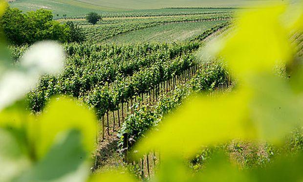 Was Burgenlands Wirtschaft denkt und fordert