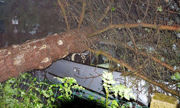 In Karlstein an der Thaya wurden mehrere Bäume durch den Sturm entwurzelt, einer fiel auf ein geparktes Auto