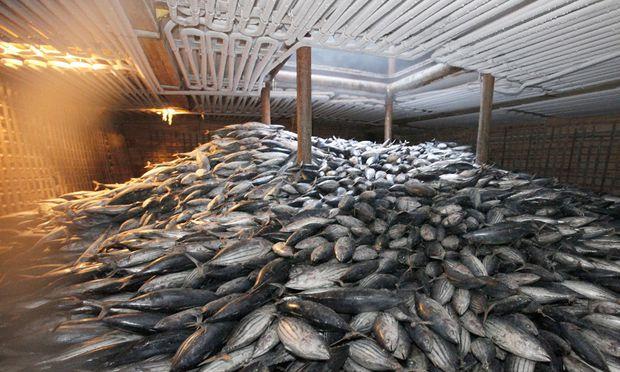 Fukushima Netz Angst Misstrauen