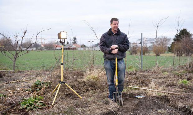 Martin Freimüller hat neben seiner Brombeerplantage im Donaufeld den seltenen Knollenziest angebaut. Da dessen Ernte so aufwendig ist, zählt er zu den teuersten Gemüsesorten.