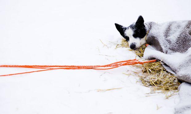 Mehr als 200 Hunde wurden dem Amt über Tierärzte als erkrankt gemeldet.