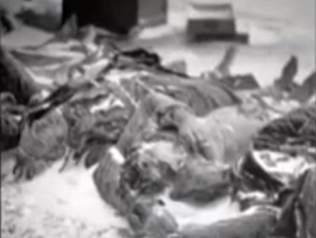Körper am Ufer (Filmausschnitt)