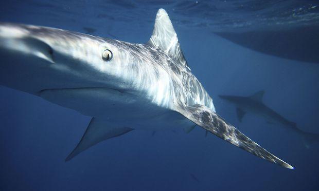 Bahamas: Haie töten 21-Jährige beim Schnorcheln - Opfer regelrecht zerfleischt