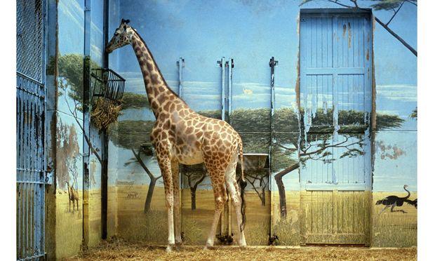 Candida Höfer fotografierte in Tiergärten auf der ganzen Welt unsere grausamen Vorstellungen von Exotik und Wildheit.
