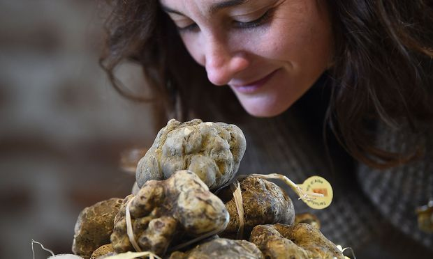 World Alba White Truffles Auction.