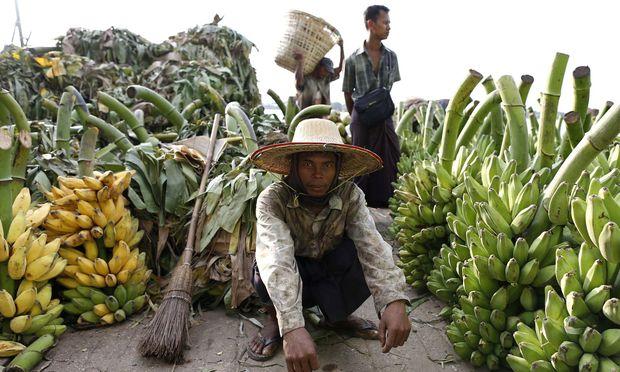 Bananan liefern wichtige Nährstoffe, ihr Anbau bietet etlichen Menschen ein Einkommen