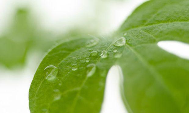 Kochen Pflanzenwasser