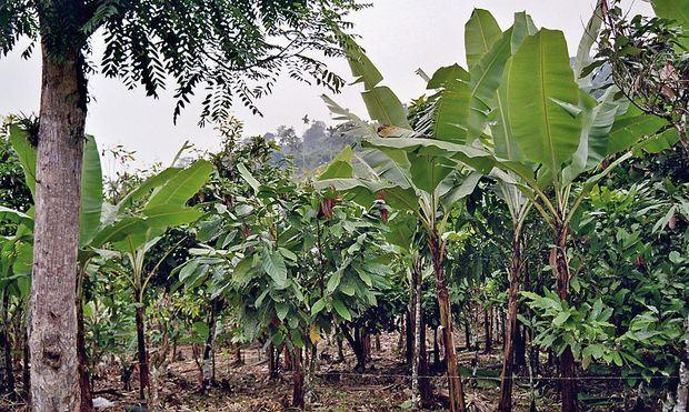 Fairtrade-Bauern arbeiten unter fairen Bedingungen.