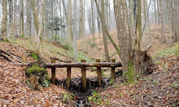 Im Wienerwald, nahe dem Ursprung der Kalten Wien.