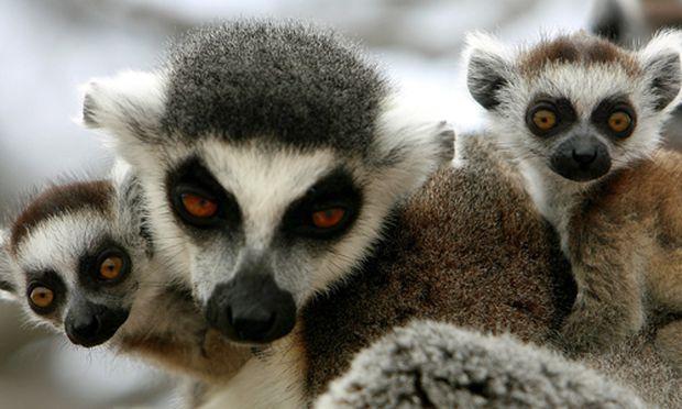 Partnersuche bei tieren
