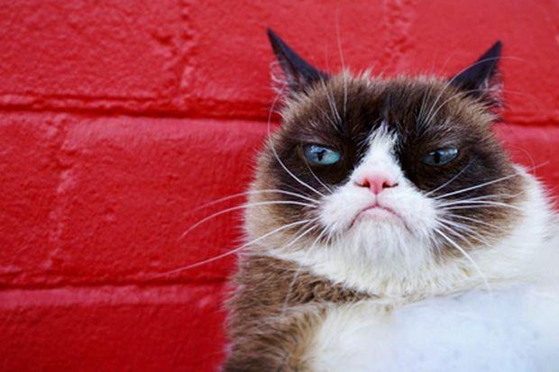 Gericht spricht Grumpy Cat 710.000 Dollar Schadensersatz zu