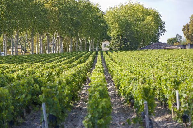 Chateau Margaux estate France Gironde Margaux The Chateau Margaux wine waits 25 months in w