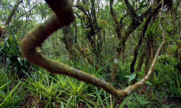 Selbststaendigkeit ueberleben Dschungel