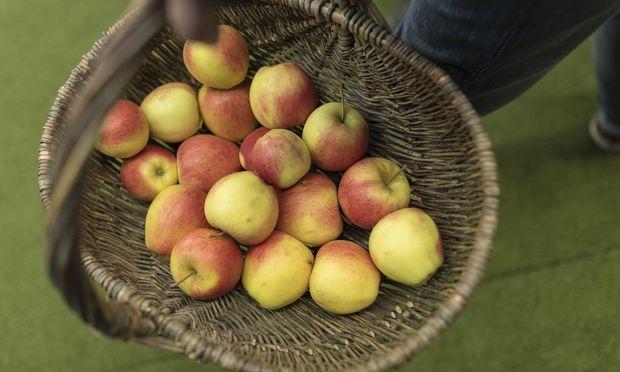 Der Apfel, ein Urprodukt.