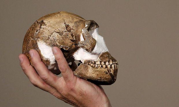 Archivbild: Schädel eines Homo naledi