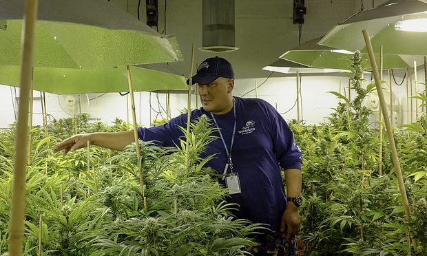 Inside The Sense of Healing Facility As Pot-Growing Expands, Power Demands Tax U.S. Electricity Grids