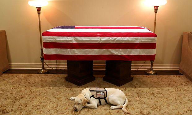 Labrador Sully hält verstorbenem Bush über Tod hinaus die Treue