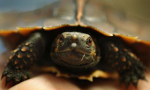 Monsteralarm In Bayern Schildkröte Biss Buben Diepressecom