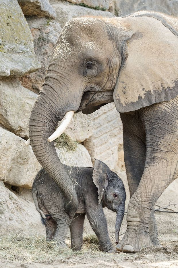 Numbi und ihr Baby