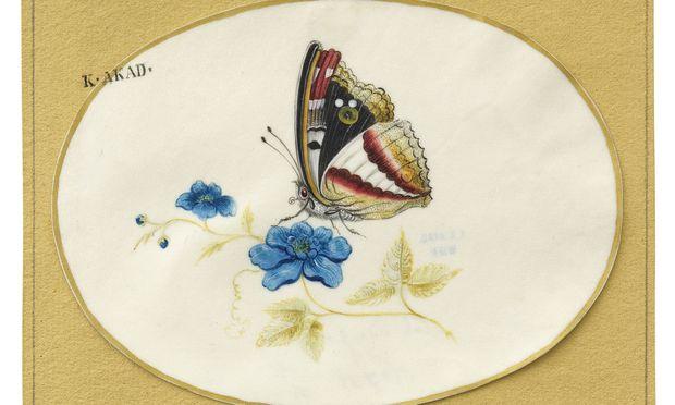"""Die Frankfurter Künstlerin und Naturforscherin Maria Sibylla Merian war schon zu Lebzeiten berühmt: Im Kupferstichkabinett befindet sich ihre Miniatur """"Schmetterling auf Blume"""", um 1700. / Bild: Akademie der bildenden Künste"""
