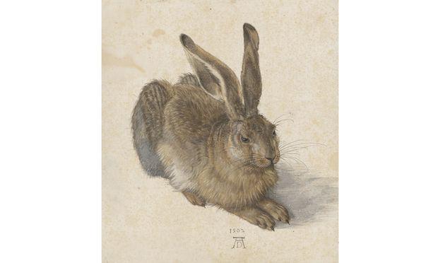"""Bisschen angeben: Sein Können hat Dürer seinen Auftraggebern mit solchen Blättern bewiesen – """"Feldhase"""", 1502."""