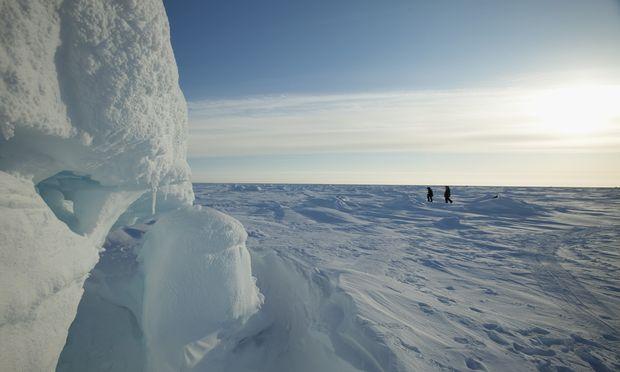 Die Polarkappen, und hier besonders die Arktis, sind sehr stark von den Klimaveränderungen betroffen.