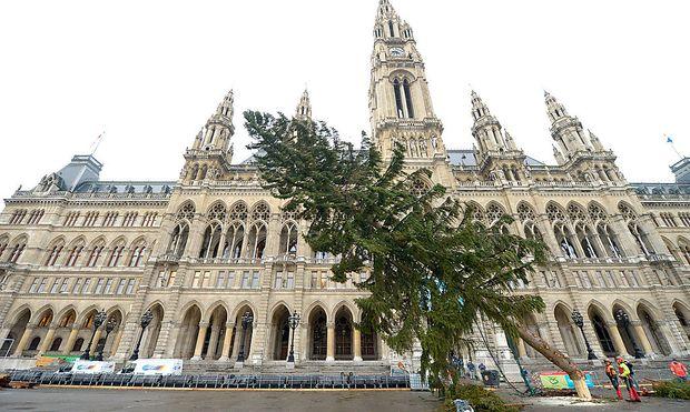 Draußen fällt der Weihnachtsbaum, in der Gemeinderatssitzung der Weihnachtsfrieden.
