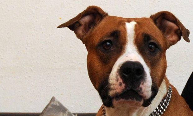 ErsteHilfeKurs Beatmen bitte Kampfhund