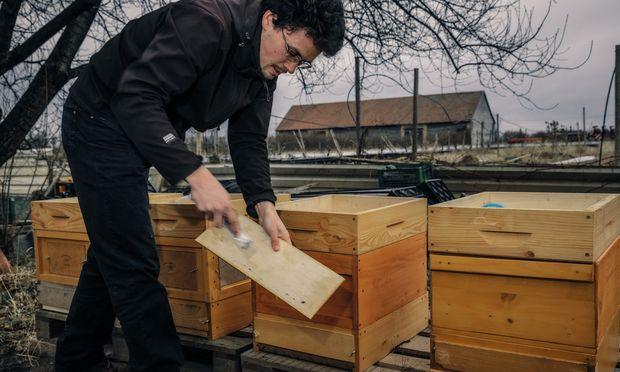 Winterschlaf. Holzarbeit gehört zum Imkerhandwerk, so Marian, der Profi ist.