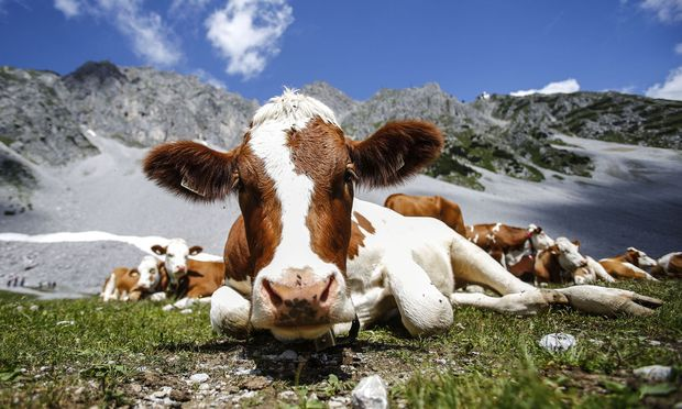Die Förderungen des Bundes und der EU für die Landwirtschaft stehen bereits in der Datenbank. Doch in vielen Bereichen fehlt nach wie vor der Durchblick.