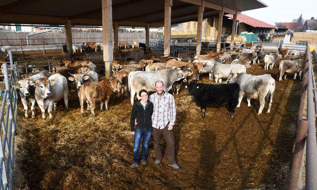 Julia und Vinzenz Harbich halten im Marchfeld rund 280 Rinder, die von April bis Oktober auf der Weide leben. Die Tiere kommen auf dem Biohof zur Welt und werden dort geschlachtet. / Bild: (c) Clemens Fabry