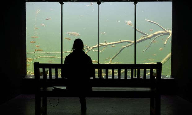 Spektakulär: Fische beobachten in der Unterwasserstation.