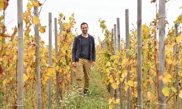 Michael Wenzel hat in seinem Garten Eden (so der Name der Riede) die historische Stockkultur wiederentdeckt.