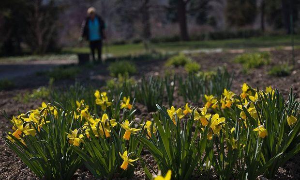 Symbolbild: Asylwerber helfen unter anderem bei der Gartenpflege von Kommunen mit.