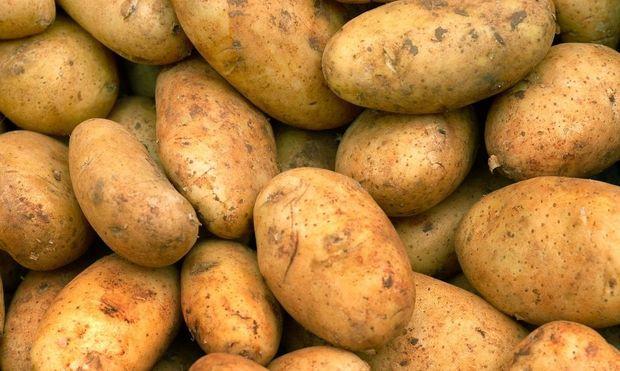 WLAN im Flugzeug: Kartoffel sollen Menschen simulieren