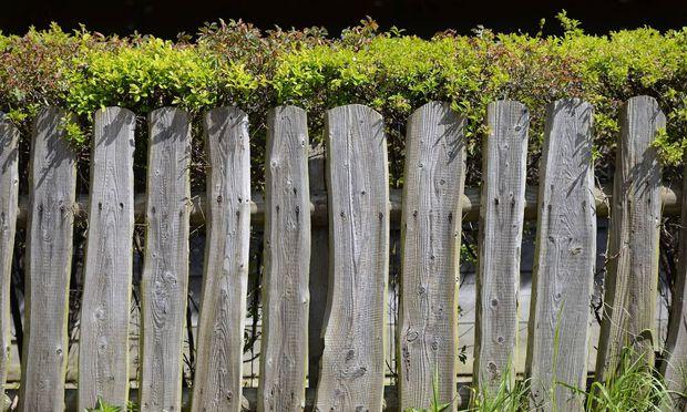 Gartenzaun und Hecke