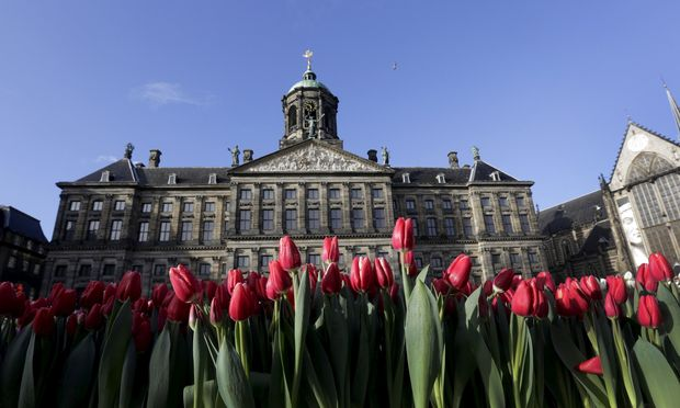 Tulips are seen placed in front of the Royal Palace at the Dam Square to celebrate the beginning of the tulip season in Amsterdam