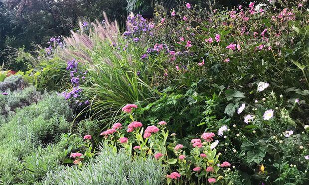 Je besser man einen Garten mit Trockenstauden plant, desto pflegeleichter wird er über die Jahre.