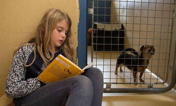 """Ein  """"Shelter-Buddy"""" auf einem Bild des Wiener Tierschutzvereins"""