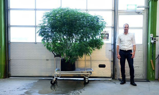 Auch diese Pflanze wurde im Labor gezüchtet – vor knapp drei Monaten.