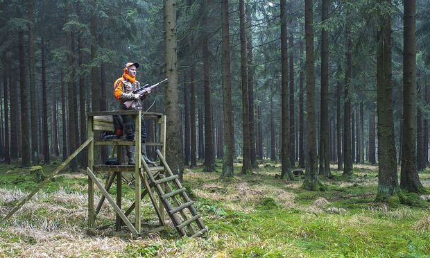 Jaeger auf Ansitzjagd Rotwildjagd Deutschland Niedersachsen hunter on raised hide deer hunting
